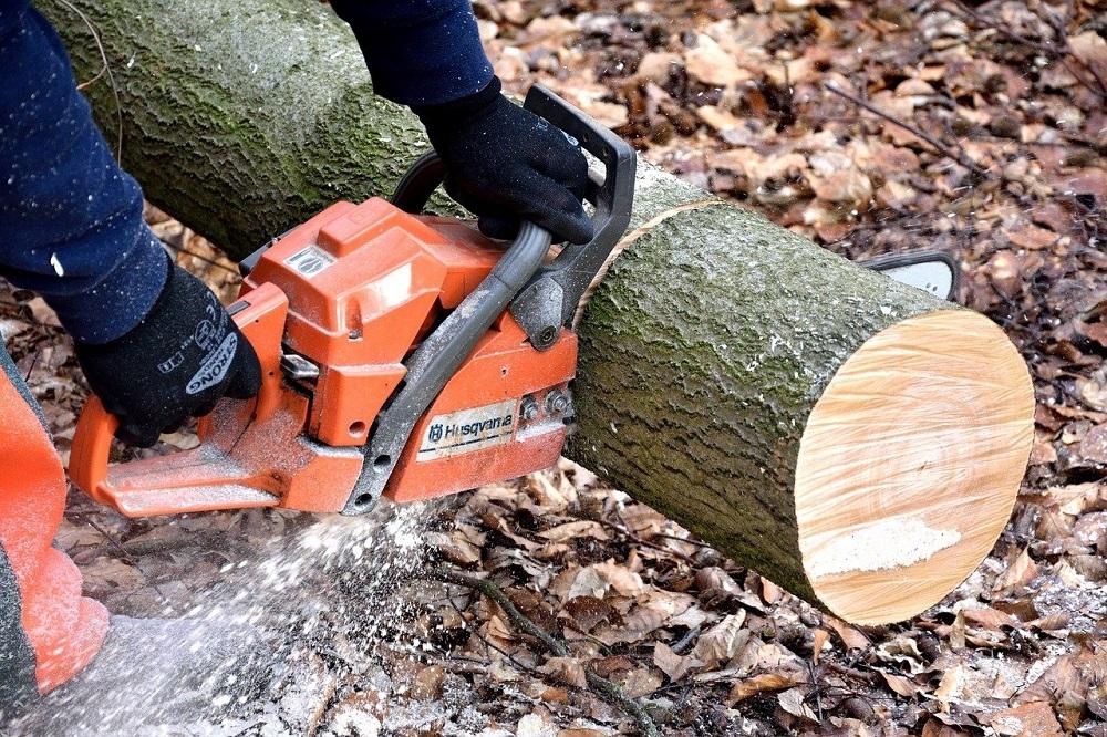 presupuesto en Córdoba talar árboles presupuesto